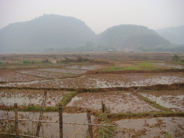 Northern Vietnam dormant rice fields