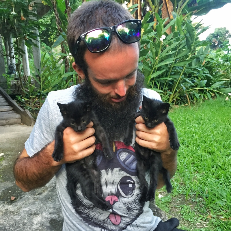 cats in indonesia