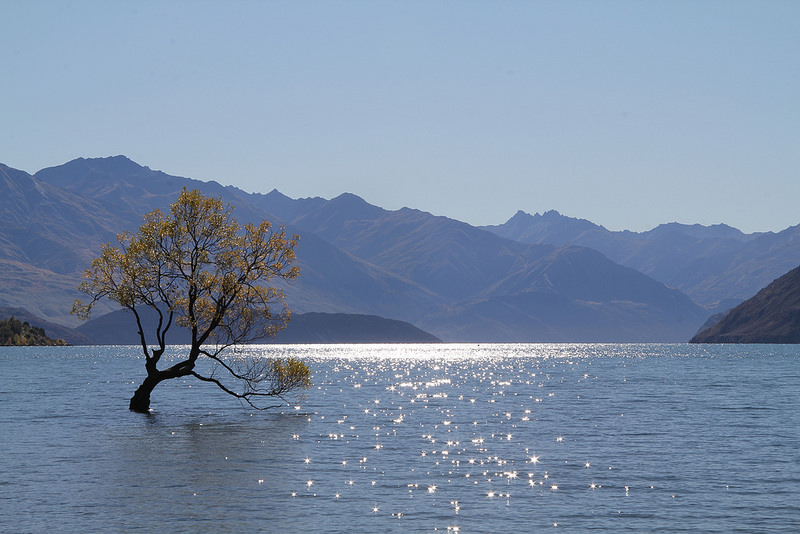 lake wanaka famous lone tree