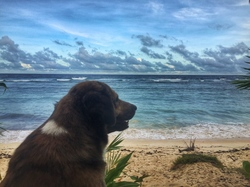 puppy wants surf too