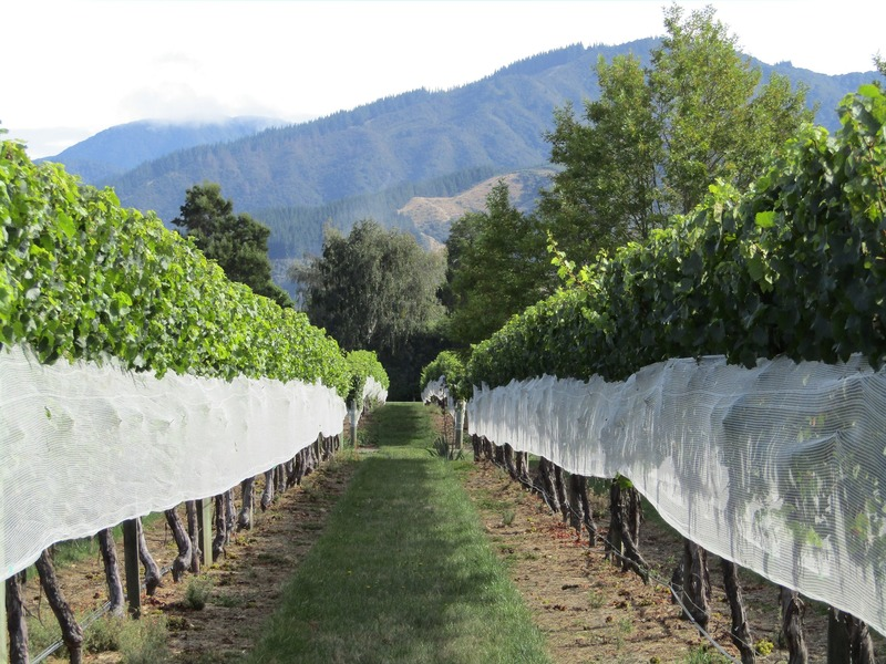 best wine in new zealand is in marlborough