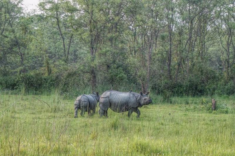 chitwan national park rhinos